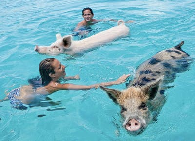 Swim With Pigs in the Bahamas | Big Major Cay - PureWow