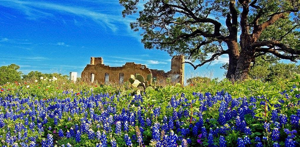 texas1
