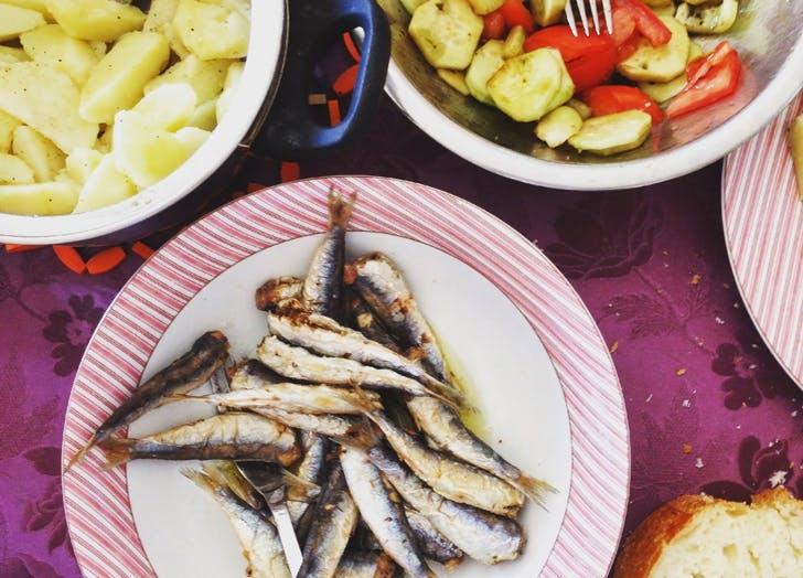 dogs sardines