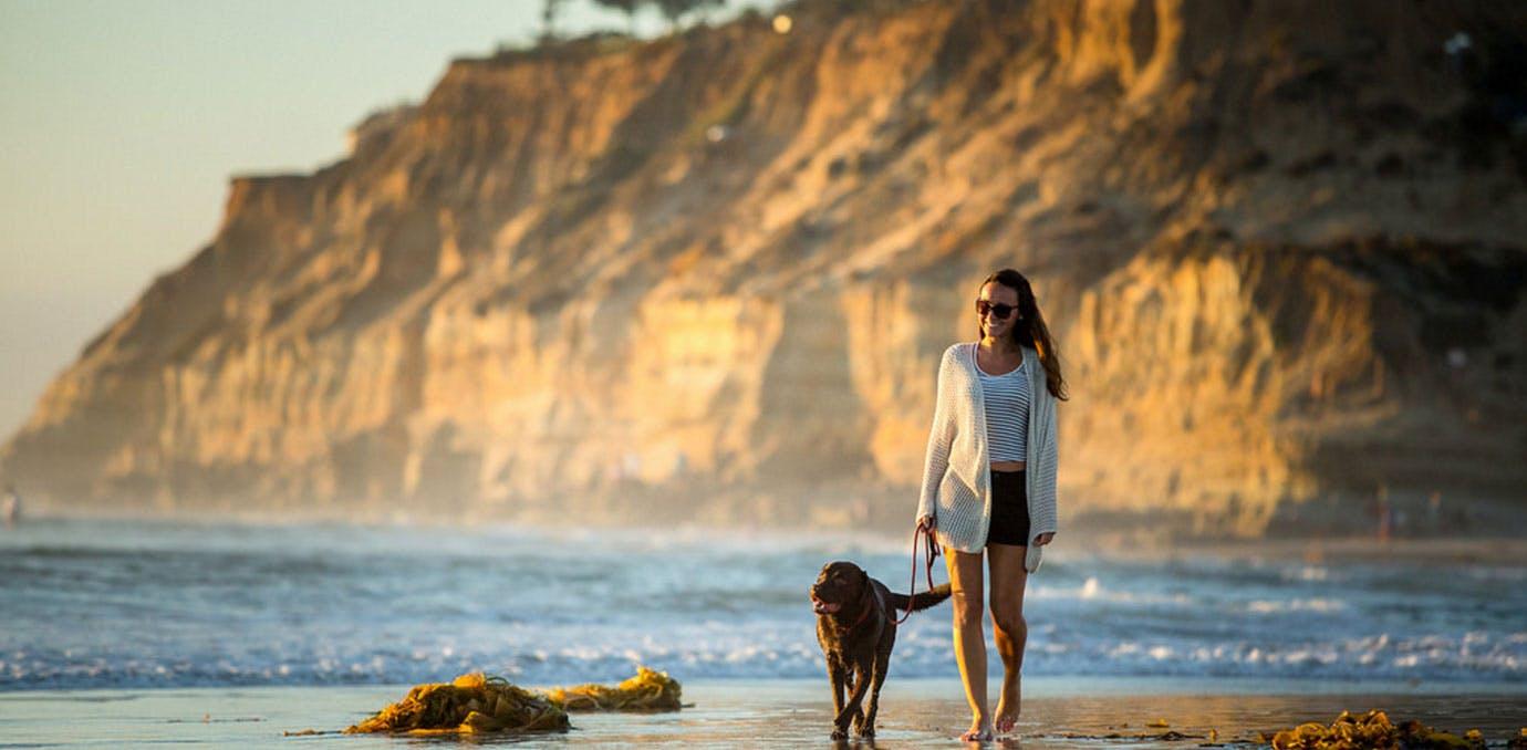 Beach DogBeach 1380x678
