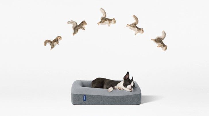 Attention Dog Owners: You Can Now Buy a Casper Mattress For Your Pup