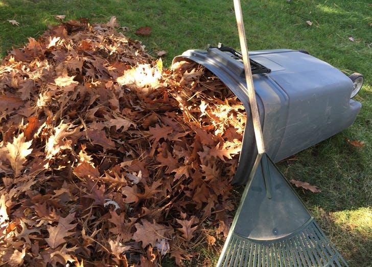 5lbs leaves