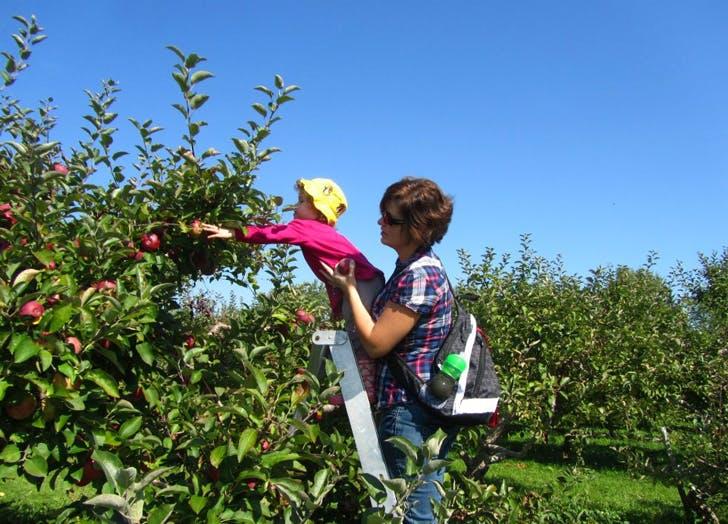 5lbs orchard