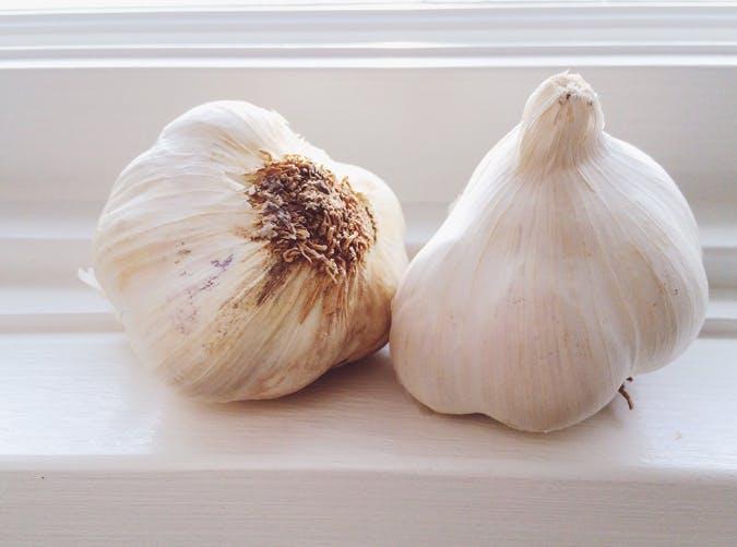 breastfeeding garlic