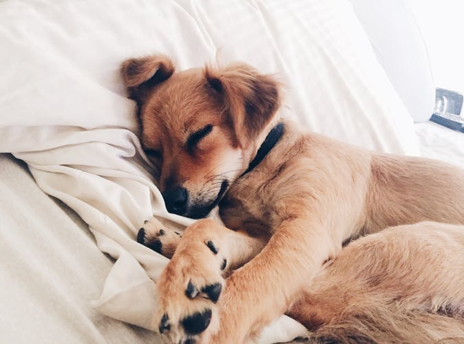 7 Reasons Its Actually Better to Let Your Dog Sleep in Your Bed