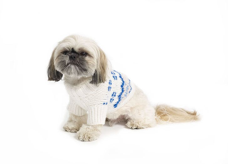club monaco dog sweater