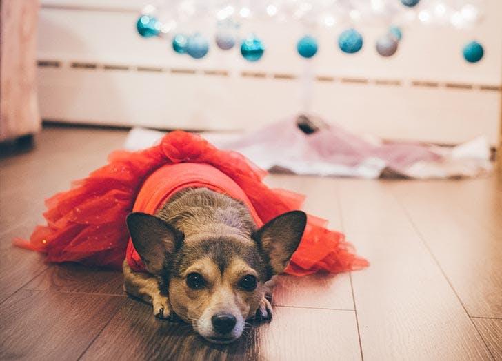 dog social media costume