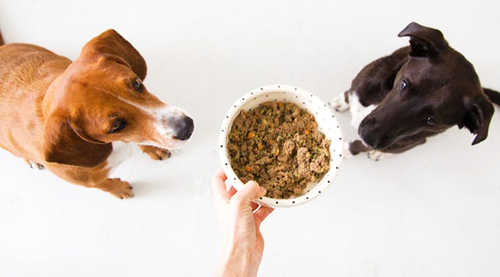 This New Dog Food Service Makes It Soooo Easy to Feed Your Pup Healthy Meals