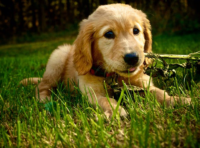 puppythingsweb