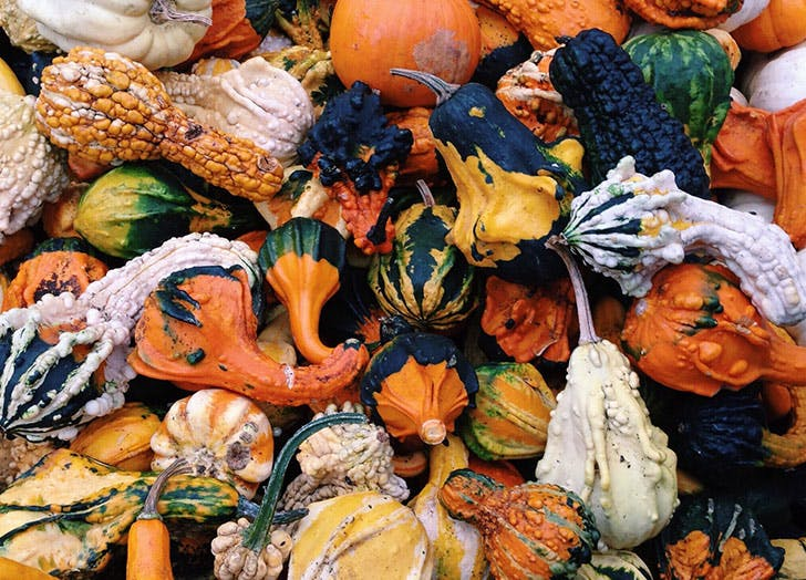 thanksgiving post gourds