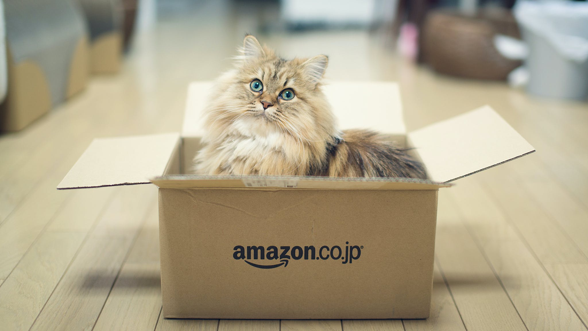 amazon prime cat box