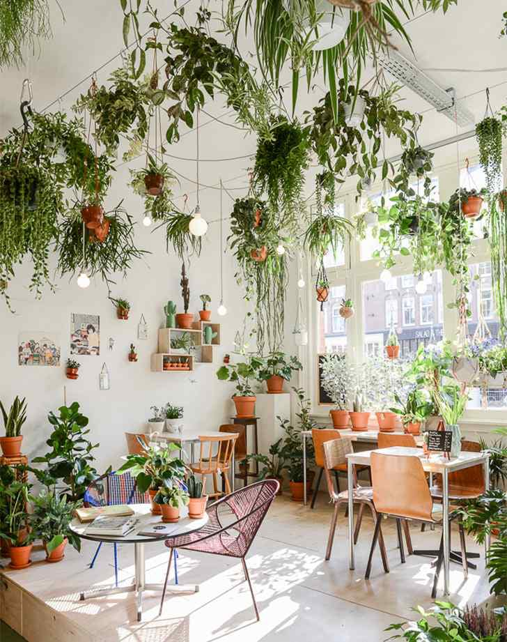 pinterest trends 2017 hanging plants