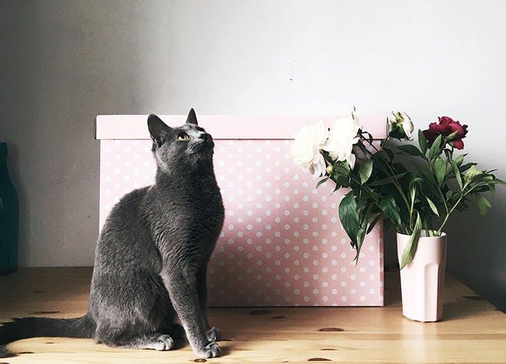 apartment pet policy cat NY