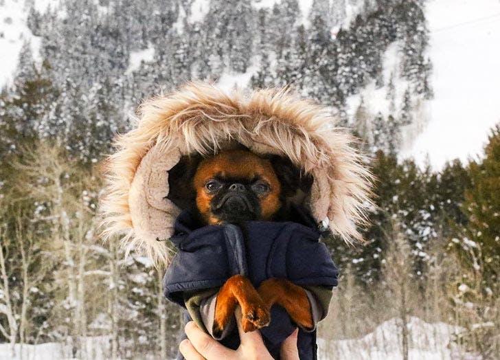 dog hoodie coat NY