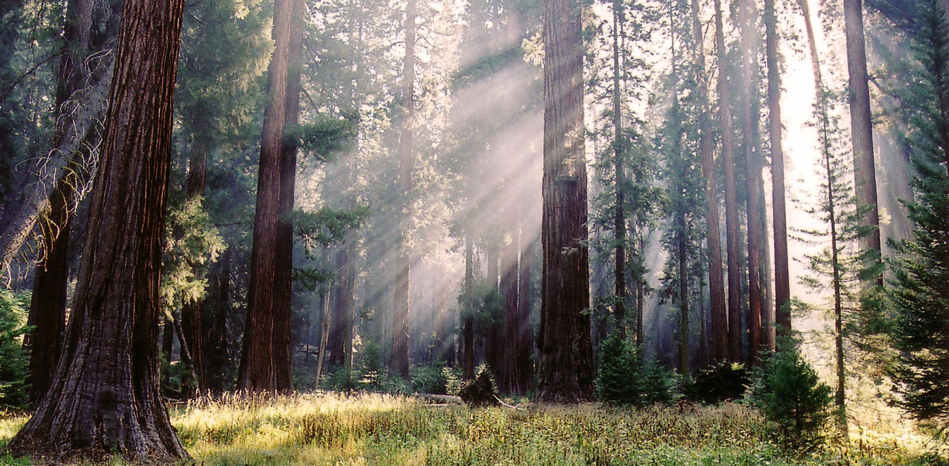 sequoia national forest los angeles road trips