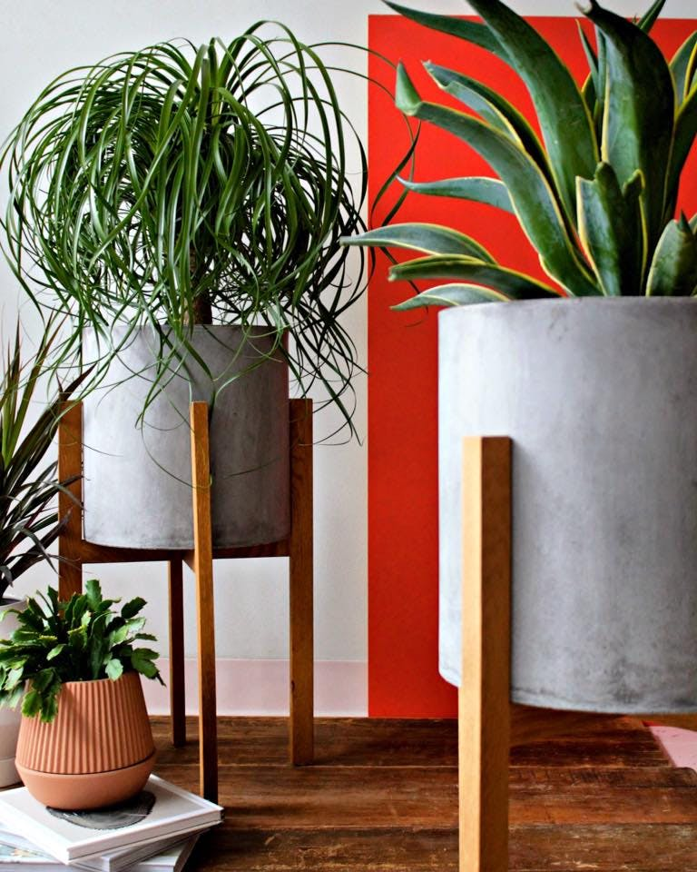 succulent plants chicago home updates