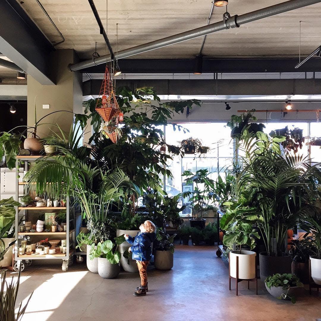 terranium workshop sprout home