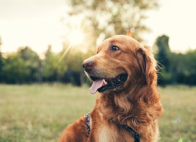 The Best Dog Breed for Zodiac Sign - PureWow