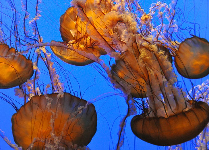 big little lies jellyfish