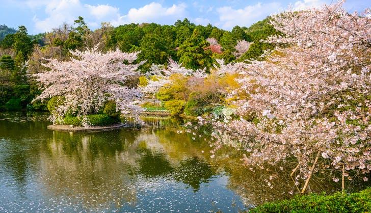 kyoto booking