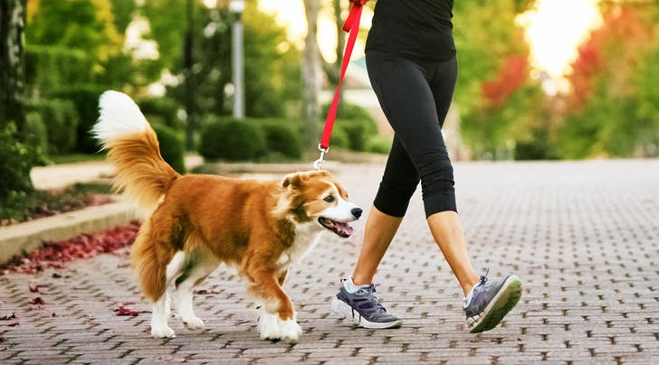 Here's Exactly How Many Steps You Should Walk Daily for Your Health, According to Science