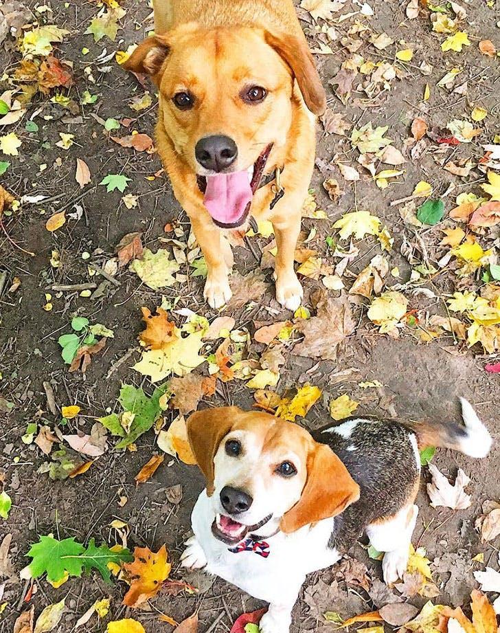 Reasons We Love Meghan Markle Pets