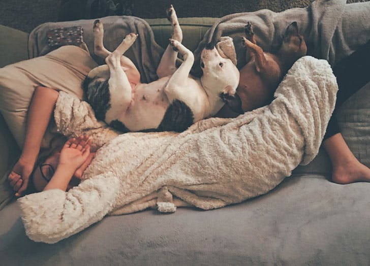 Woman laying on couch with dogs