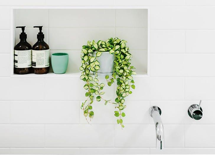 showerplant