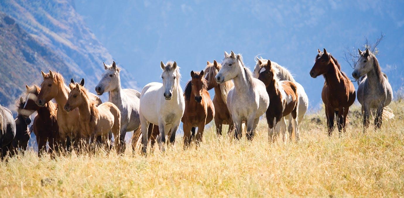 summer travel horses