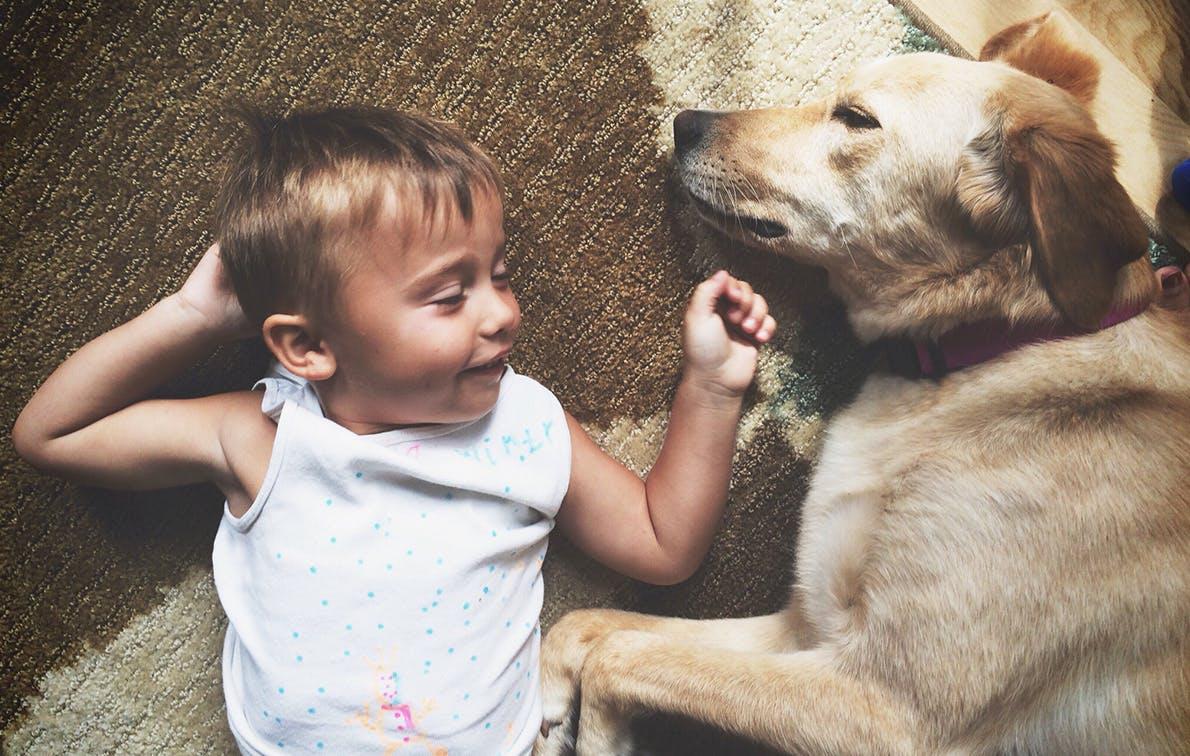 toddler tantrum dog