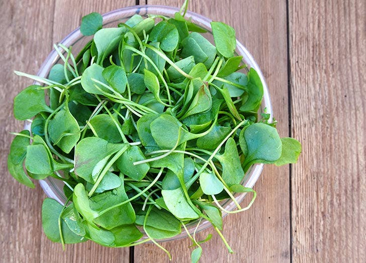 watercress greenmarket NY