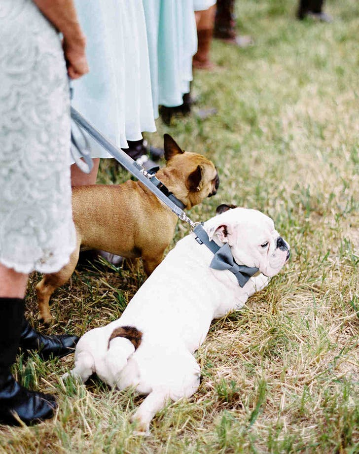 weddingdogs10