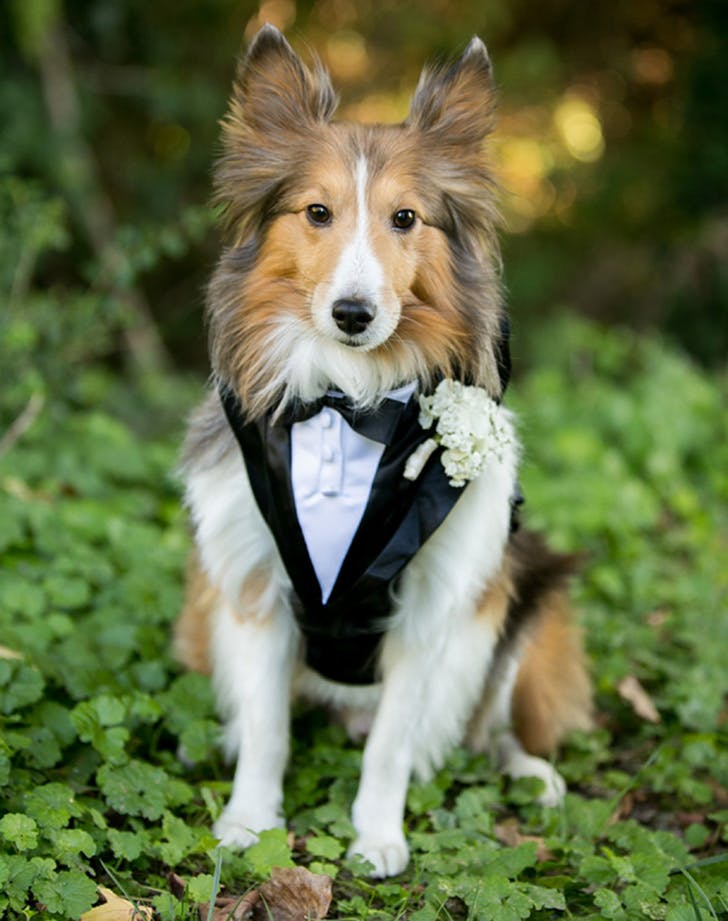 weddingdogs11