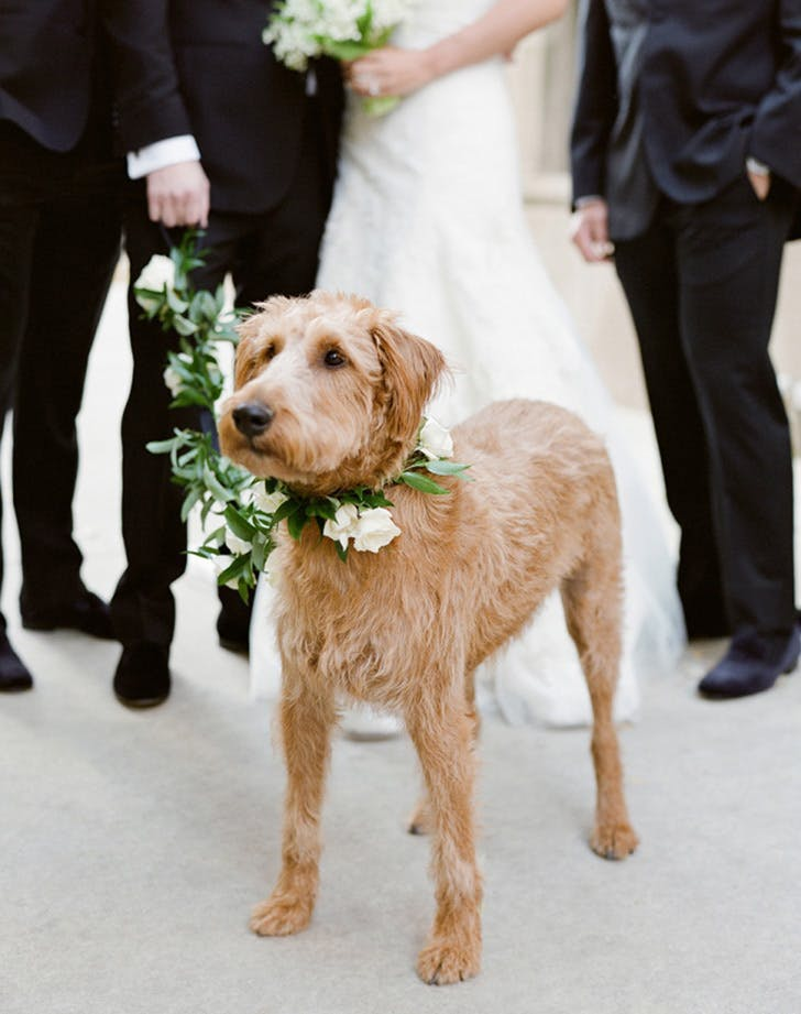 weddingdogs12