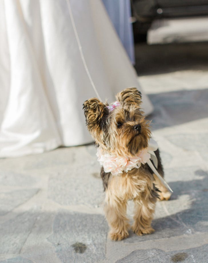 weddingdogs3