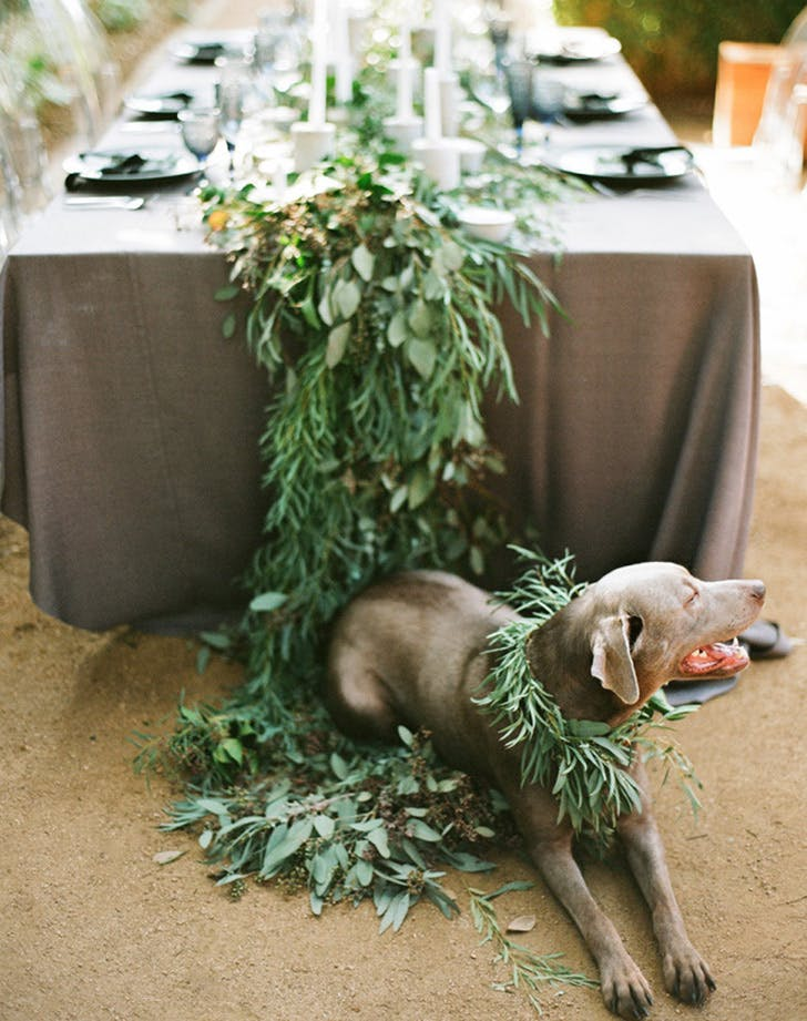 weddingdogs4