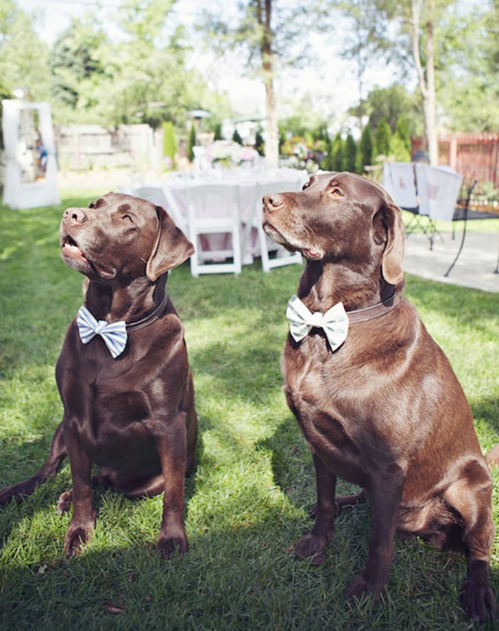weddingdogs5