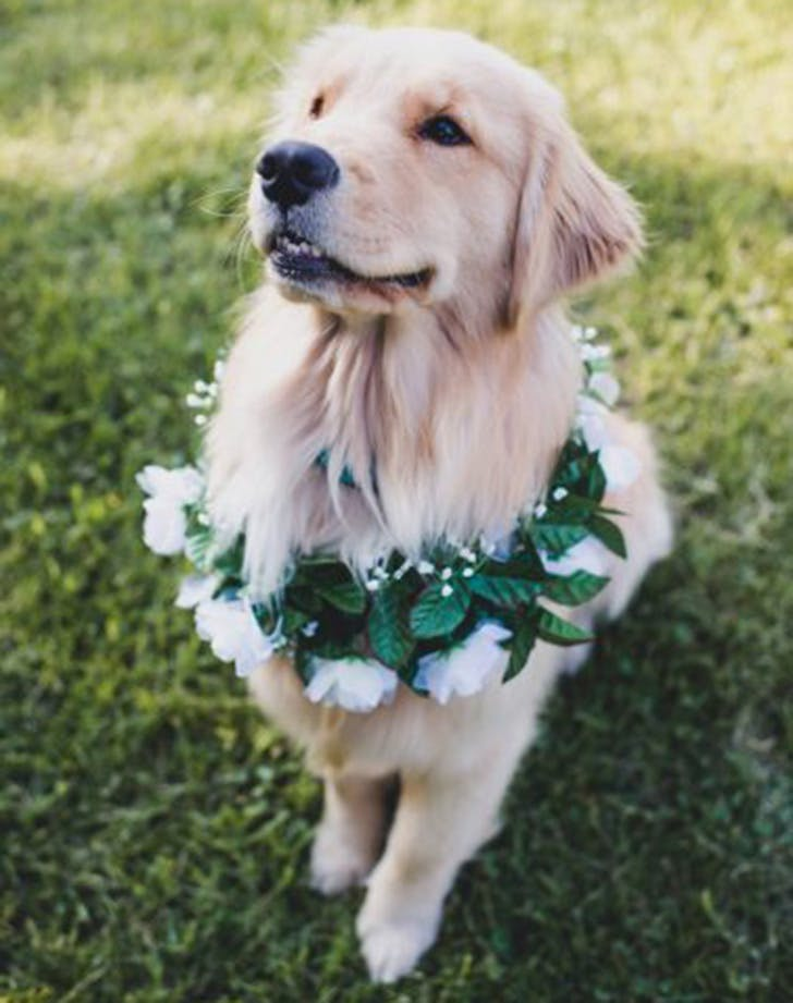 weddingdogs6