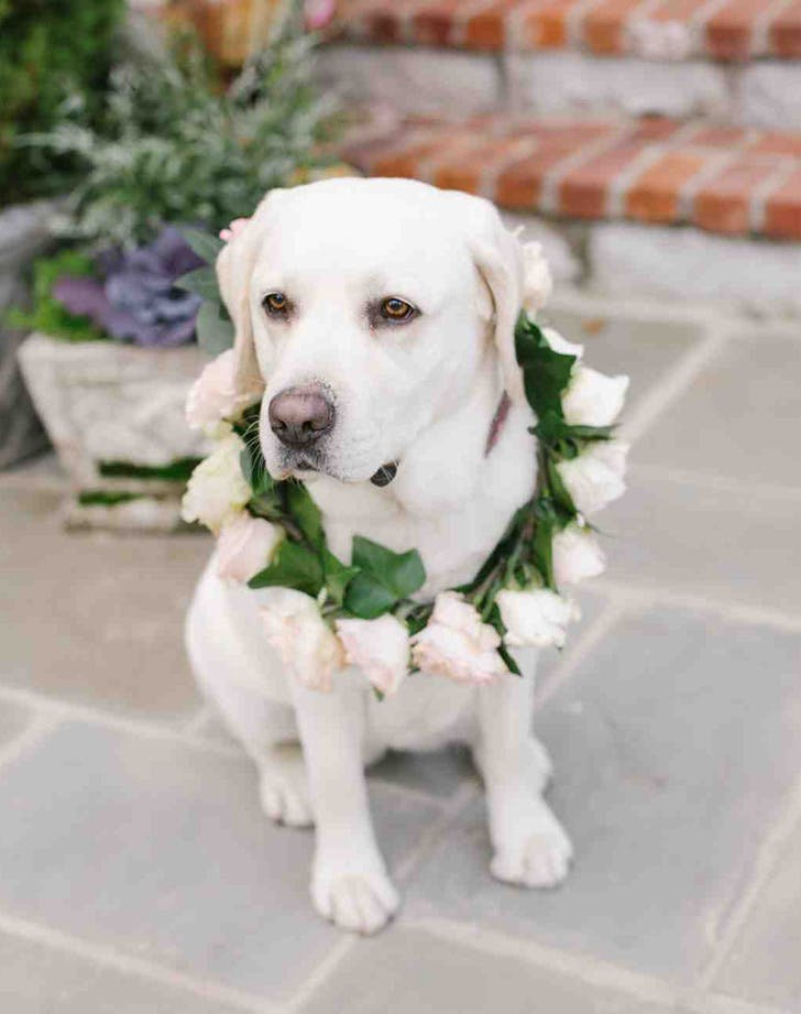 weddingdogs7