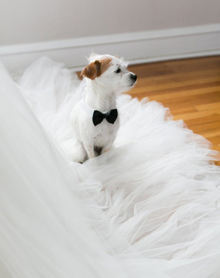 weddingdogs8
