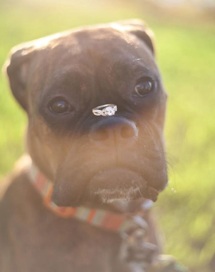 weddingdogs9