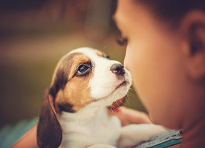 9 Tips For How To Potty Train A Puppy Purewow