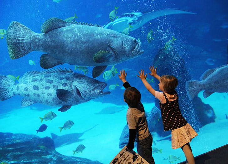 7 Of The Best Aquariums In Us Purewow