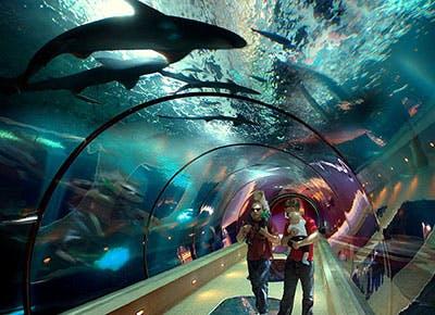 Oregon Coast Aquarium 400