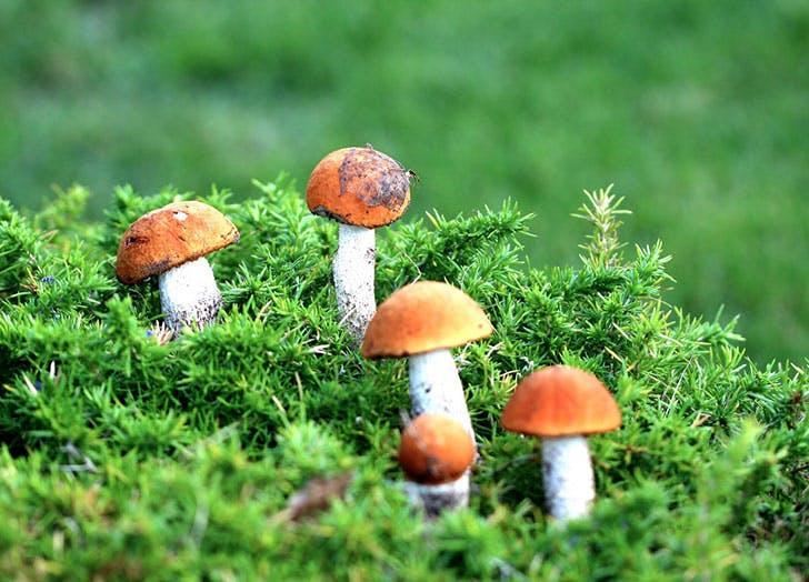 Red mushrooms on grassy hill