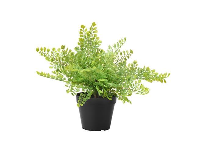 faux plant 2