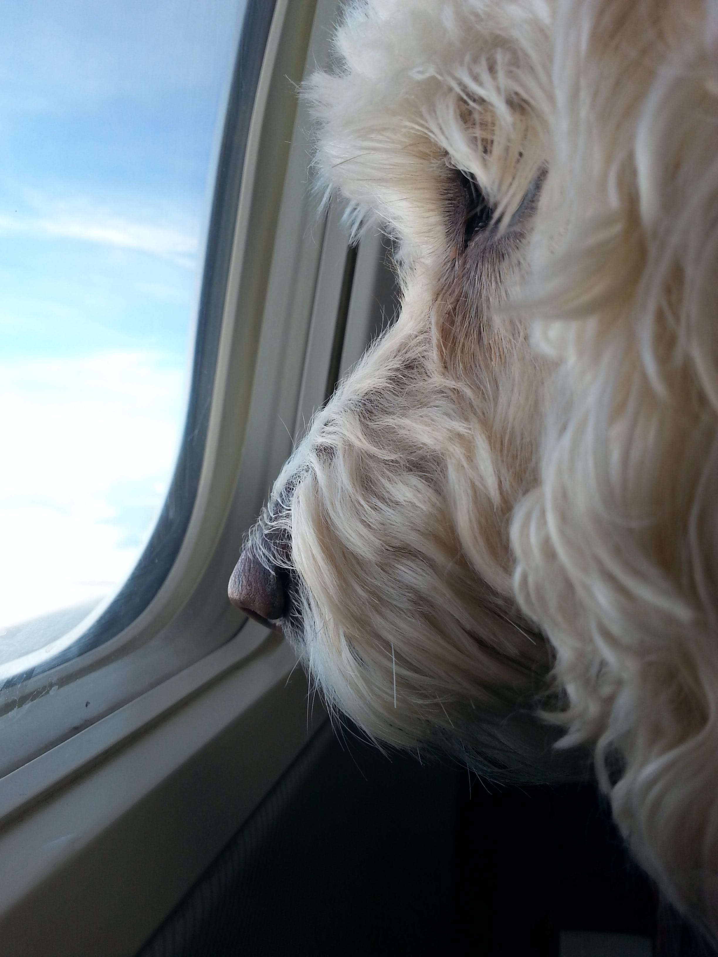 flying with your pet window