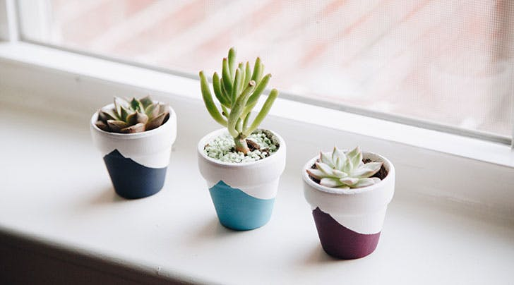 Great News: Your Succulent Obsession Is Actually Really Healthy