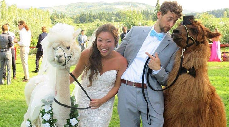 This Just In: You Can Now Rent Llamas as the Best Wedding Guests of All Time