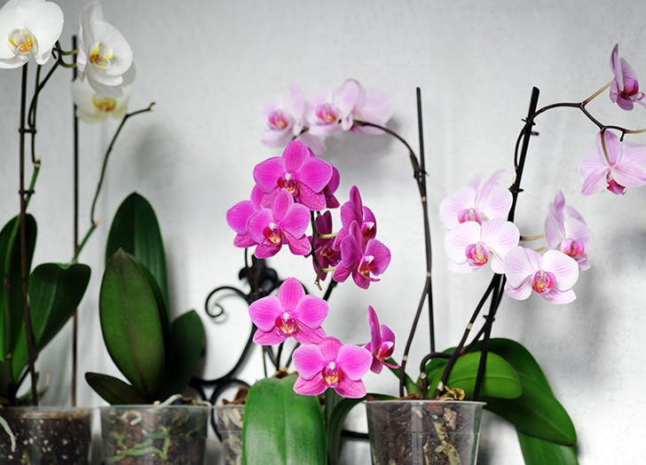 orchid care 1